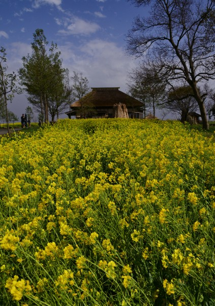 07:福島潟の春