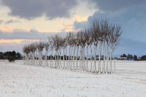 風雪のハサ木