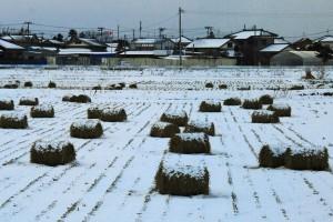 04:初雪