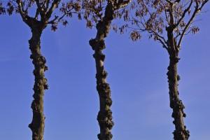 05:残ったハサ木